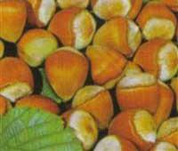 Sadnice voca lesnik ludolf