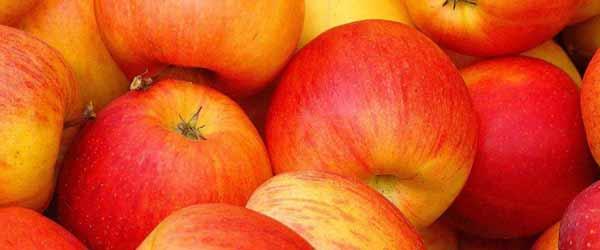sadnice jabuke cena