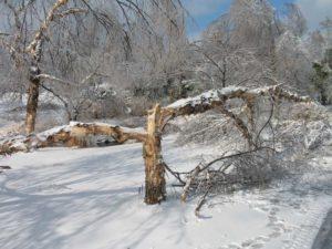 vocna stabla i sneg