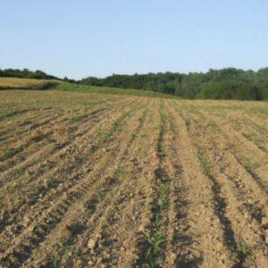 voćnjak i zemljište