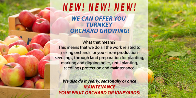 Orchard growing - Planting fruit seedlings or maintaining orchards